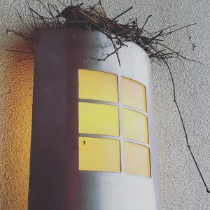 Heated bird nest